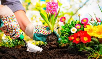 ¿Cómo mantener su jardín bonito de forma eficiente?