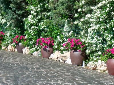 ¿Qué flores elegir para un jardín perfecto todo el año?