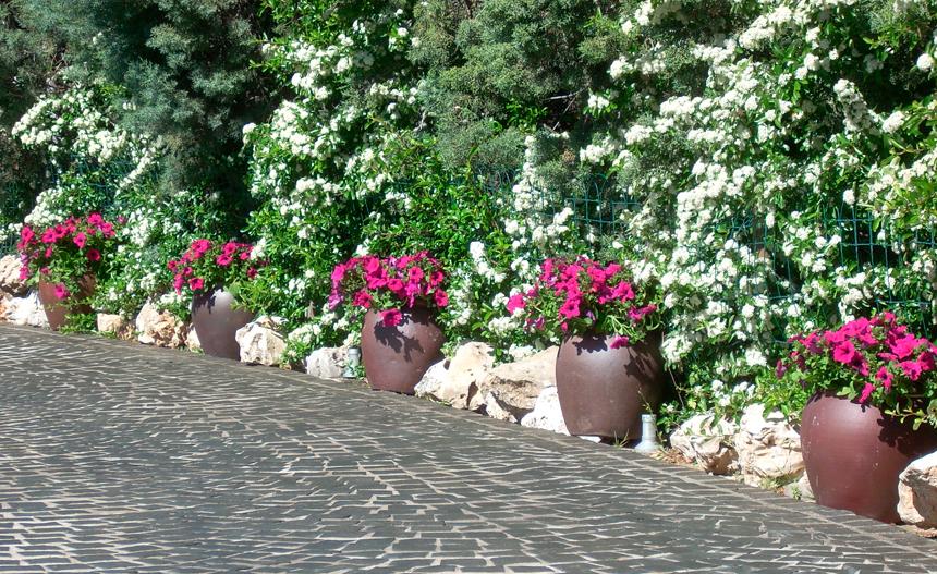 Qué flores elegir para un jardín perfecto todo el año